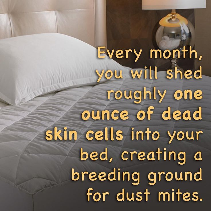 1000 Images About Dust Mite On Pinterest Eucalyptus Oil