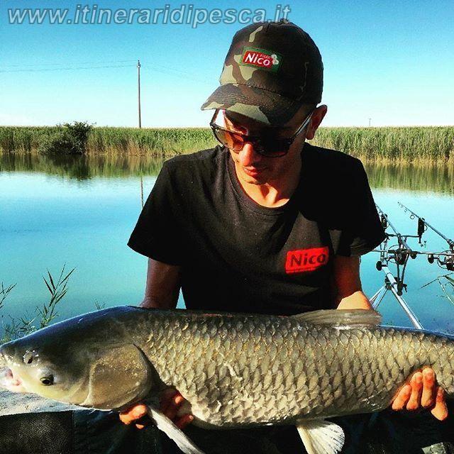 Laghi dorati - Ferrara - amur a carp fishing pesca fishing