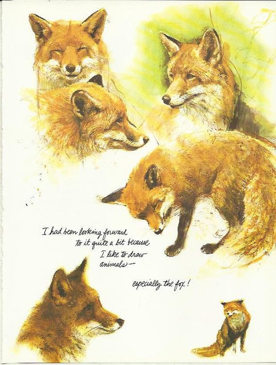European Fox by Rien Poortvliet 1983 colour dog hound print                           lb xxx.