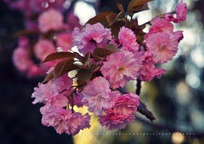 Pölcz Klaudia - kisklau: Mifelénk tavasszal