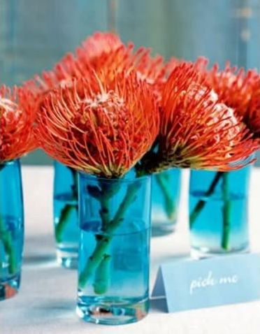 orange protea centerpieces in aqua vases - just as pretty in clear or navy vases. Protea are so cool and different.