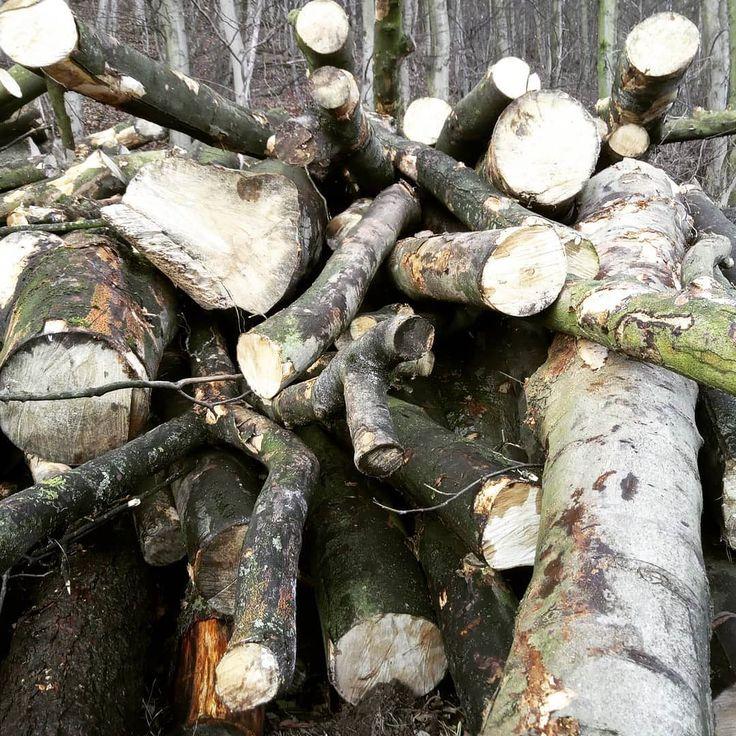 #wood in #guisborough woods