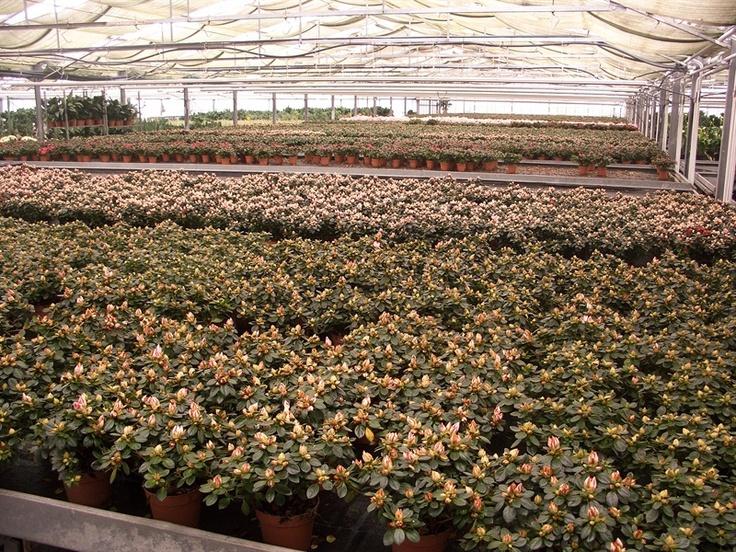 Un'area di circa 5.000 metri quadrati è destinata a cash and carry all'ingrosso. Veniteci a trovare  Florpagano di Antonio Pagano (piante e fiori) www.florpagano.com