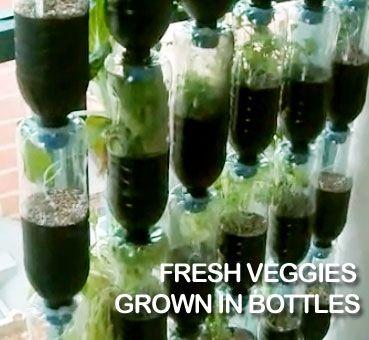 horta vertical em garrafas PET