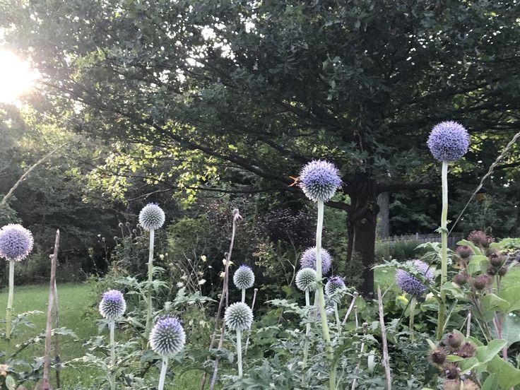 Pin by Caroline Blais on Carogil Farm in 2020 Farm