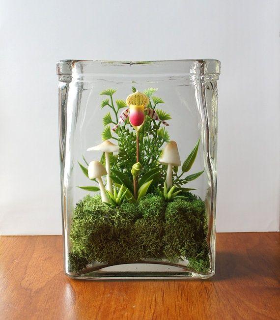 Tiny Lady Slipper Orchid Terrarium - Compost Rules.