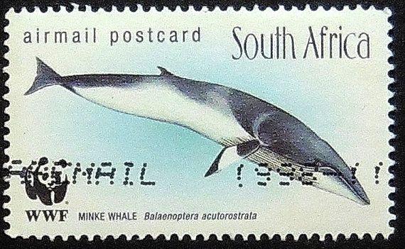 Minke Whale South Africa  Stamp