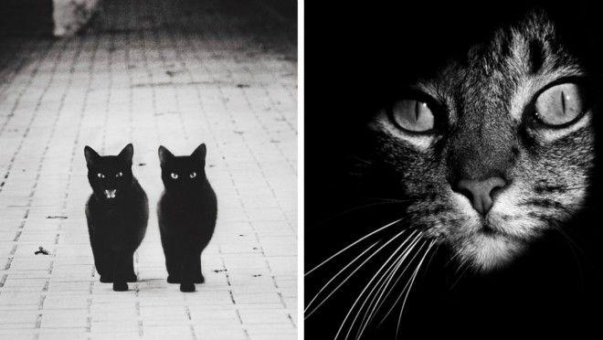 DOKONALOST! Záhadný život koček zachycený v tajemných portrétech - Evropa 2