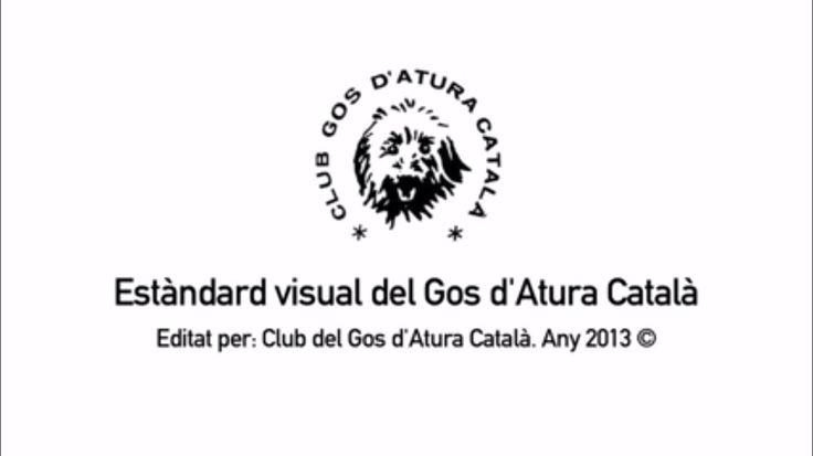 ESTÀNDARD GOS D'ATURA CATALÀ - Català