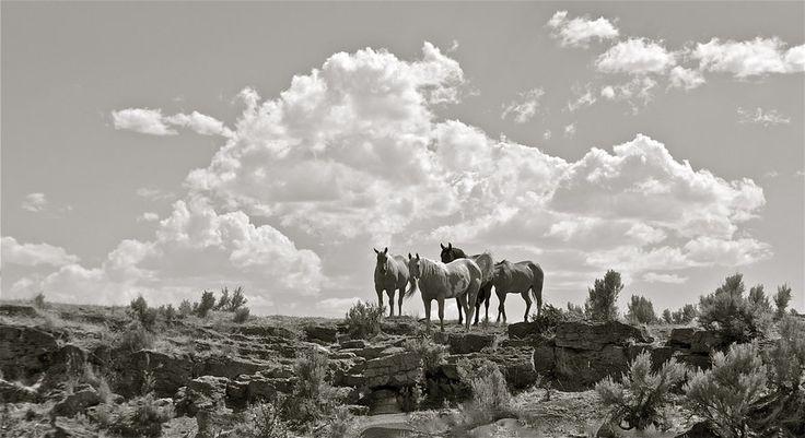 'The Wild, Wild, West' by Jphotography-LUV.deviantart.com on @deviantART