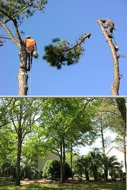 This tree company has been providing prompt, cost-effective and dependable services for many years. They provide professional tree trimming and stump grinding services, among others.