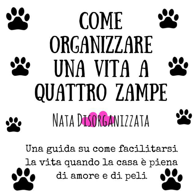 Nata disorganizzata: Come organizzare: la vita con un animale