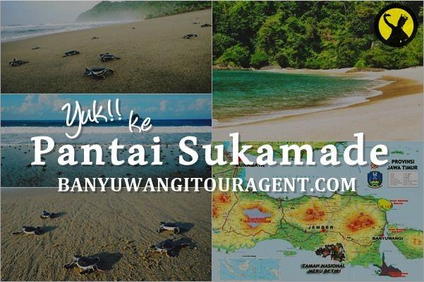 Pantai Sukamade Banyuwangi merupakan tempat konservasi penangkaran penyu di kawasan Taman Nasional Meru Betiri. Info selengkapnya klik disini...