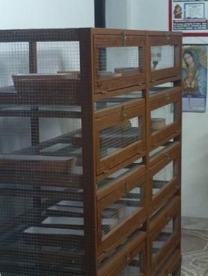 Jaulas Para Cuyes con Comederos y Bebederos - Módulos de Crianza