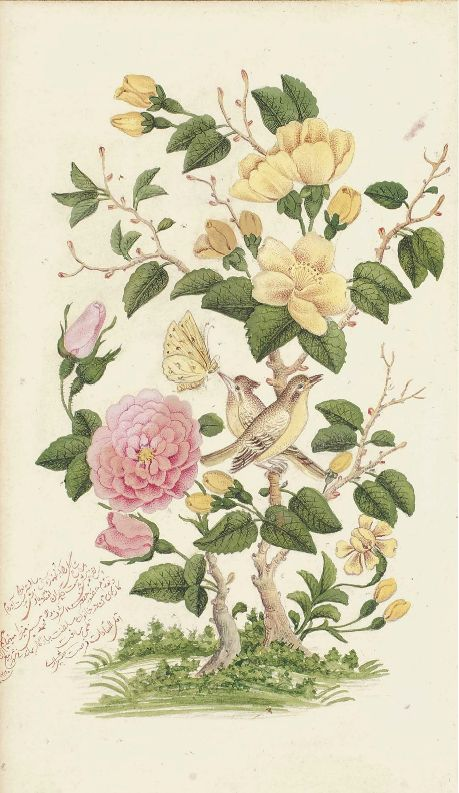 ROSE AND NIGHTINGALE (GUL-O-BULBUL)  SIGNED FURSAT SHIRAZI, QAJAR IRAN, DATED RABI' II AH 1280/SEPTEMBER-NOVEMBER 1863 AD Watercolour on paper, with two nightingales and a butterfly amidst a rose bush, signed and dated in red nasta'liq script in the lower left hand side corner, laid down between pink and grey borders