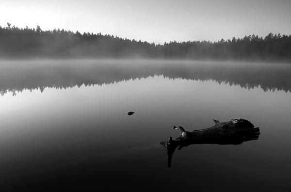 Log in a foggy Finnish lake - prints for sale