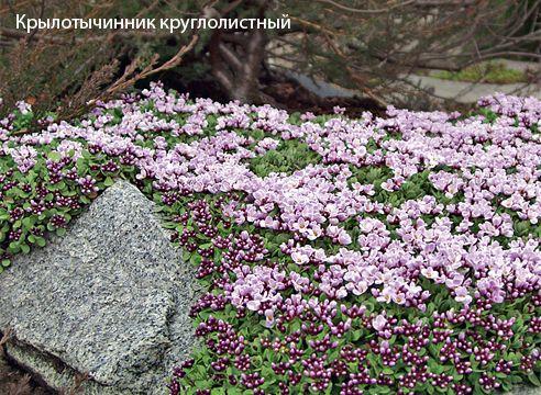 Уральский сказ: сад Татьяны Голубевой на Supersadovnik.ru