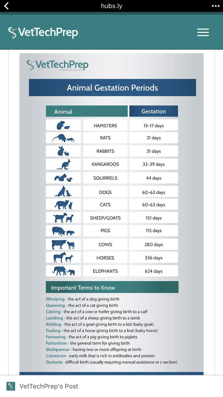 Animal gestation info graphic vettech