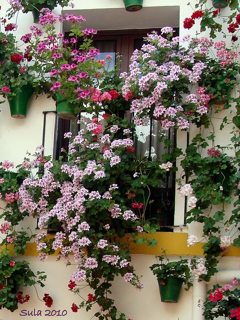 61 best Patio of Cordobeses images on Pinterest | Cordoba ...