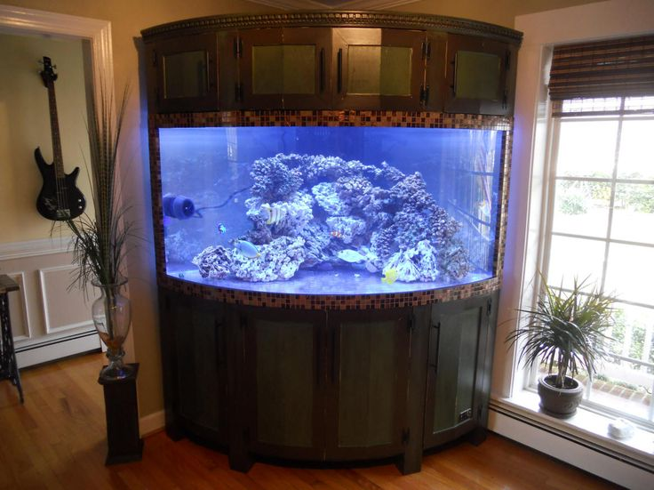 Built in saltwater tank my 235 gallon corner bow front for 55 gallon corner fish tank