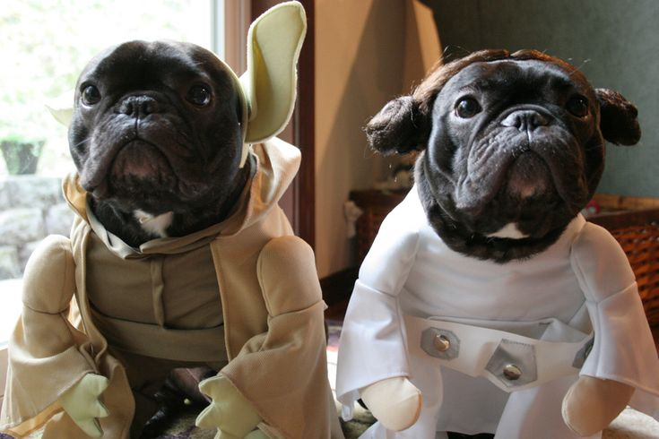 May the force be with you #StarWars #Bulldogs #Costume