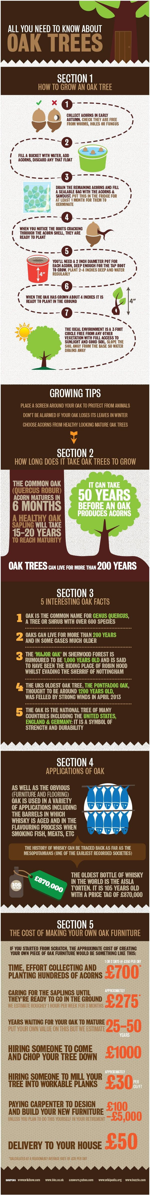 Infographic: All You Need to Know About Oak Trees - Ways2GoGreen Blog
