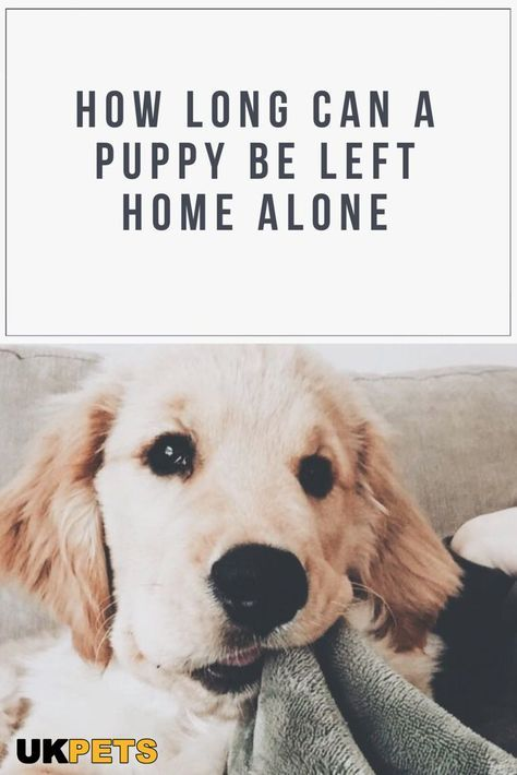 Keep Your Puppies At Home