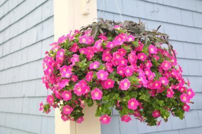 best 25 types of flowers ideas on pinterest peony. Black Bedroom Furniture Sets. Home Design Ideas