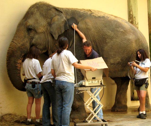 How to get a zoo vet externship