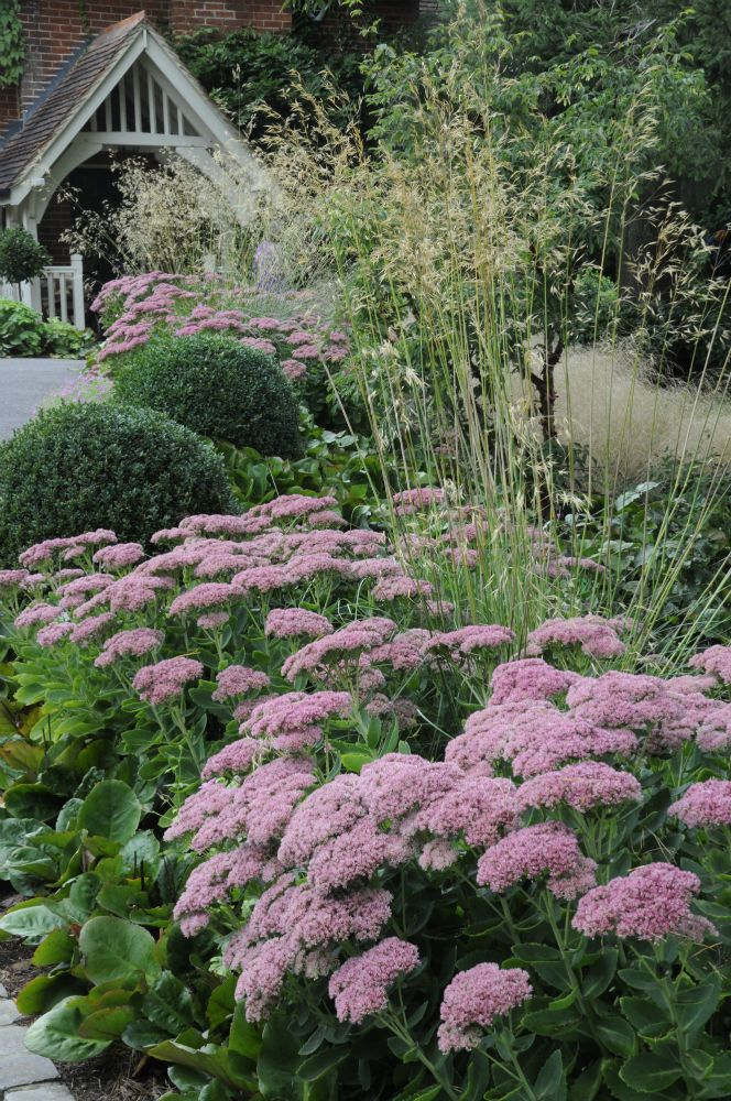 Ngs Hill Farm Box Stipa Gigantea Sedum Arthur Road
