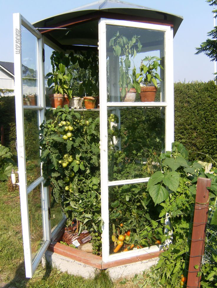 Pieni kasvihuone tehty vanhoista ikkunoista.