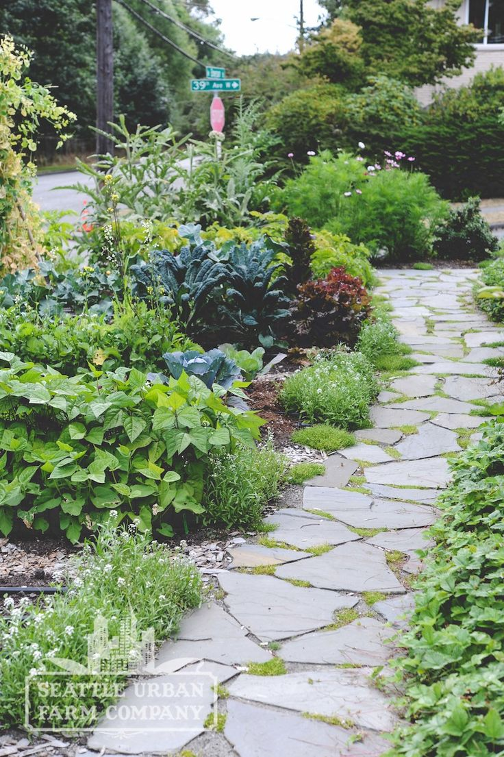 9 best EDIBLE LANDSCAPE Design by Seattle Urban Farm Co images