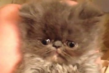 Drop Everything And Watch This Live Kitten Cam