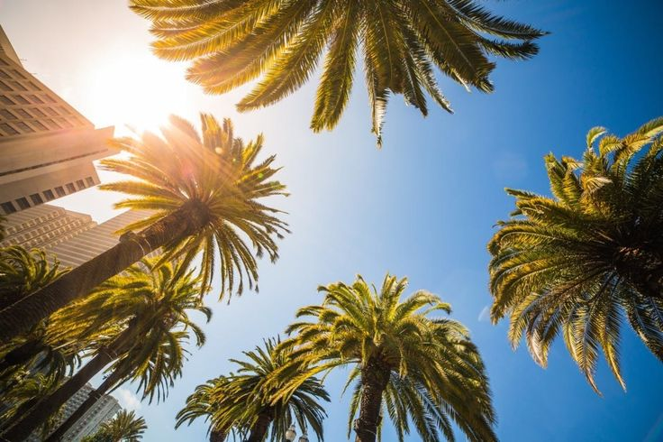 It is the nature of the strong heart that like the palm tree it strives ever upwards when it is most burdened.  #CouponHills  #Like4Like #Follow4Follow #Inspirational #Motivational #Motivations