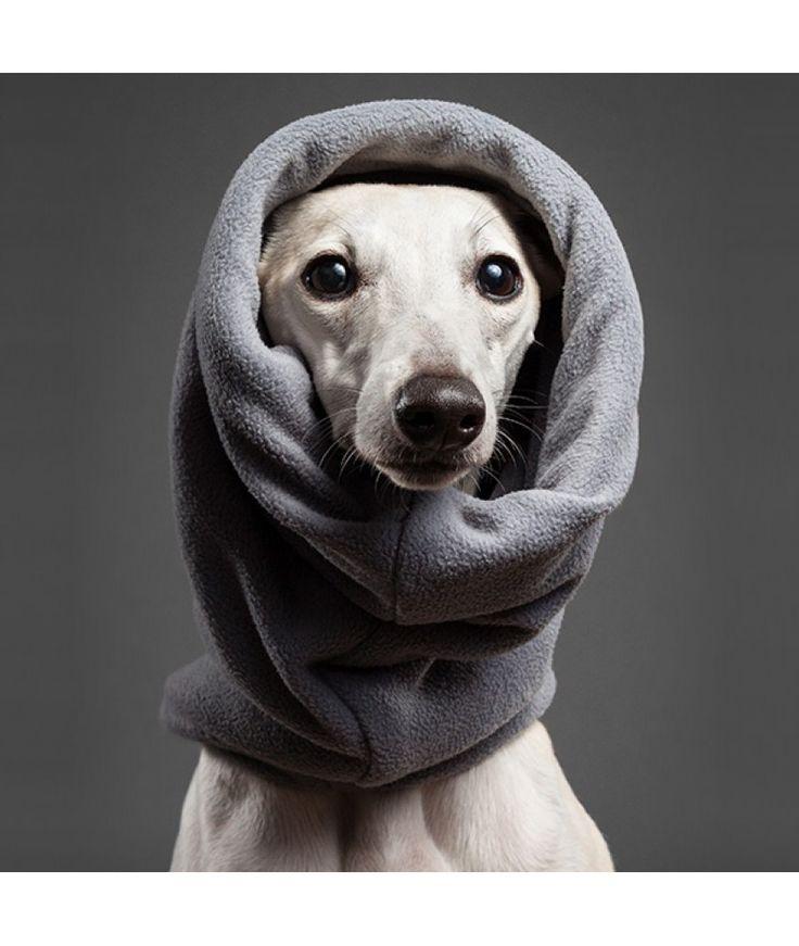 Kutya sál - Kutyaruha