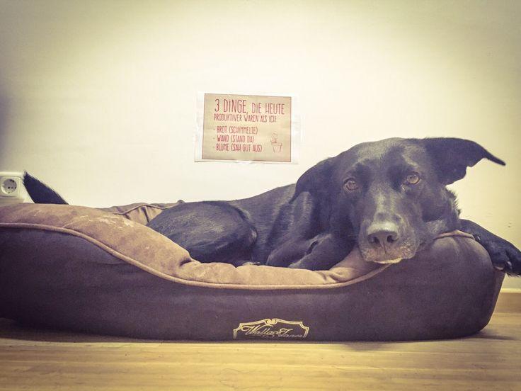 Agenturhund bei der Arbeit