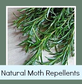 Did you know you can make your own natural moth repellents using rosemary and other ingredients?