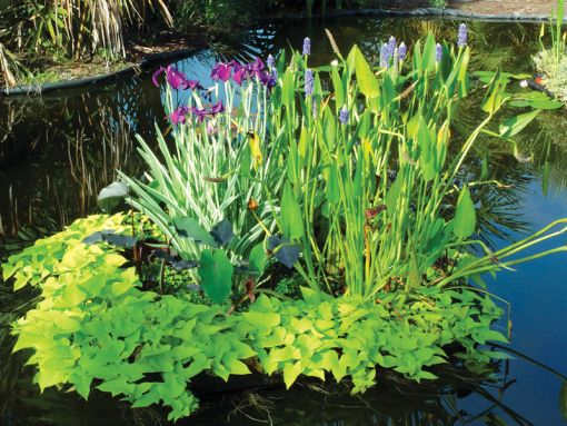 1000 images about floating pond islads on pinterest for Best aquatic plants for small ponds