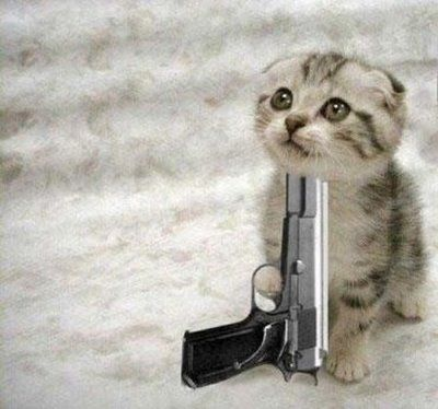 With Guns | Cute Kittens With Guns | Funny and Cute Cats Gallery ...