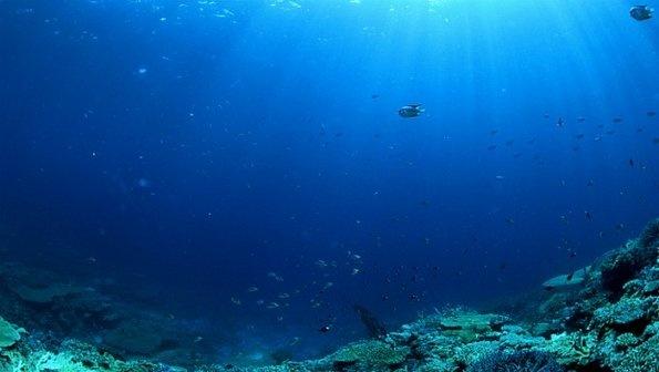 Mudança na acidez dos oceanos pode resultar em catástrofe marinha ainda neste século
