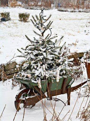 Snowy tree in a wooden wheelbarrow.-loving this! I need to fund a junky cool wheelbarrow.Holiday, Ideas, Winter, White Christmas, Country Christmas, Rustic Christmas, Christmas Decor, Christmas Trees, Outdoor Christmas