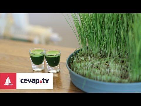 Buğday çimi suyu nasıl hazırlanır? - YouTube