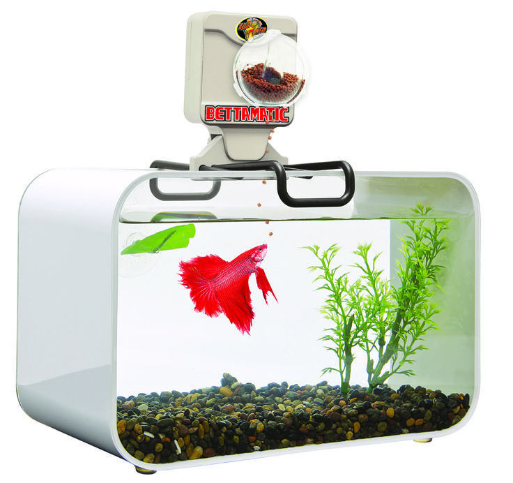 17 best images about betta bling on pinterest for Betta fish feeder