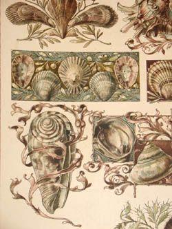 Seder Shells