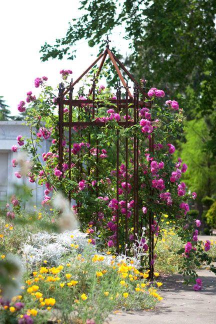 1092 besten rosen kletter rosen climbing roses bilder. Black Bedroom Furniture Sets. Home Design Ideas
