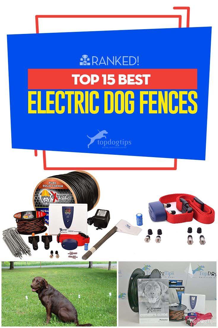 15 Best Electric Dog Fences Dog Fence Wireless Dog Fence Dogs