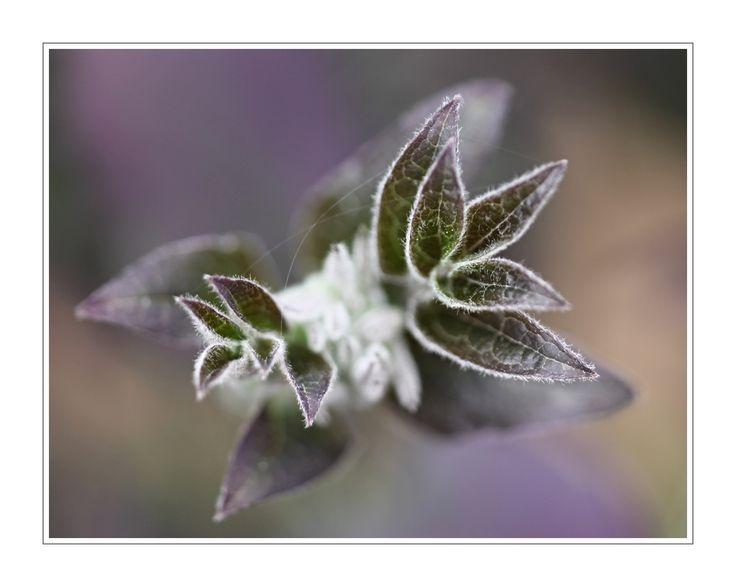 foto květin