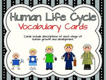 Human life cycle vocabulary cards for Life of pi character development