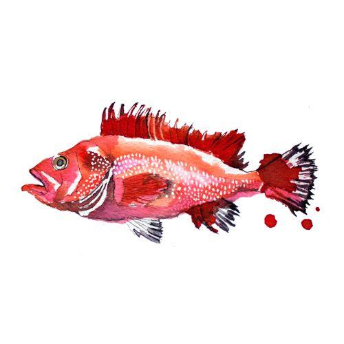 Print pez rojo