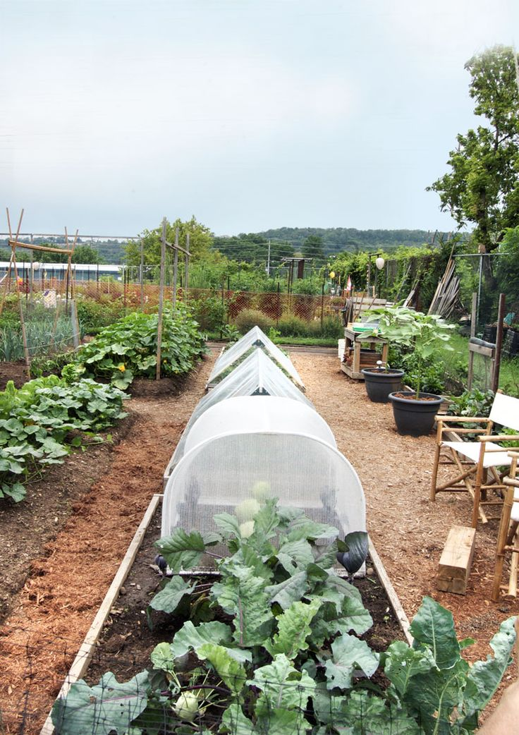 20 simple gardening tips for creating a beautiful and productive garden.The Art of Doing Stuff